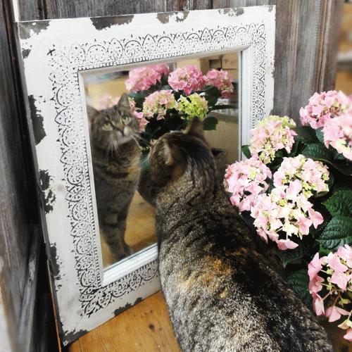 Fotorámečky, obrazy, zrcadla